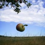 Giải mã giấc chiêm bao thấy cây Táo & nằm ngủ mơ thấy ăn quả táo