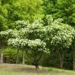 Giải mã giấc mơ thấy cây tổng quán sủi