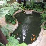 Giải mã giấc mơ thấy hồ cá & nằm ngủ mơ thấy bể cá