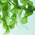 Giải mã giấc mơ thấy các loại tảo thực vật & nằm ngủ mơ thấy cây tảo